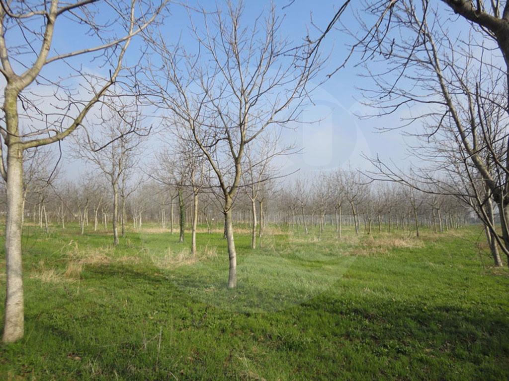 Mazzano terreno agricolo in vendita