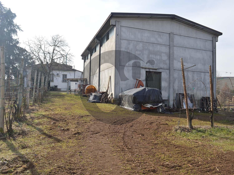Carpaneto Piacentino aziendina vitata in vendita