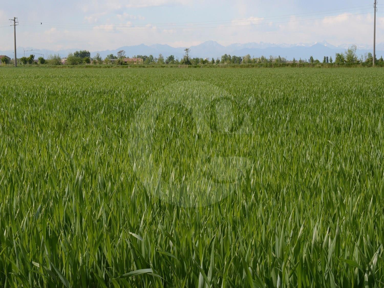 Azienda agricola in vendita bassa bresciana