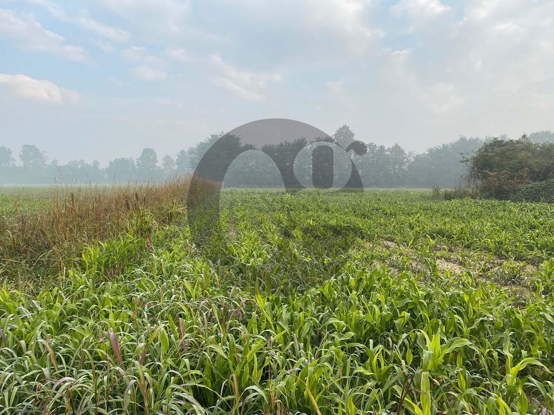 Bassa bresciana azienda agricola in vendita
